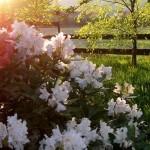 Rośliny ogrodowe i dodatki do ogrodu agroturystycznego