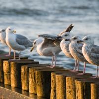 Na urlop do Nowęcina – wypoczynek nad Bałtykiem!